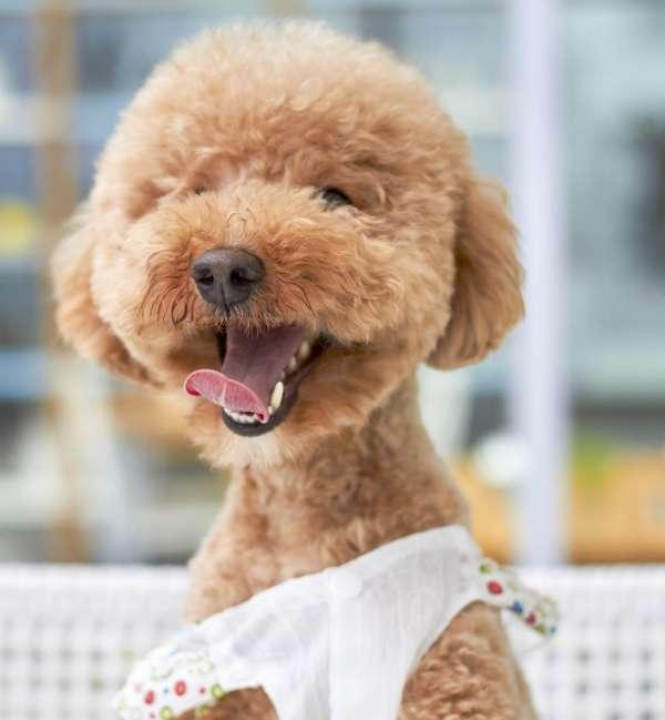 Dog Grooming Glen Rock New Jersey