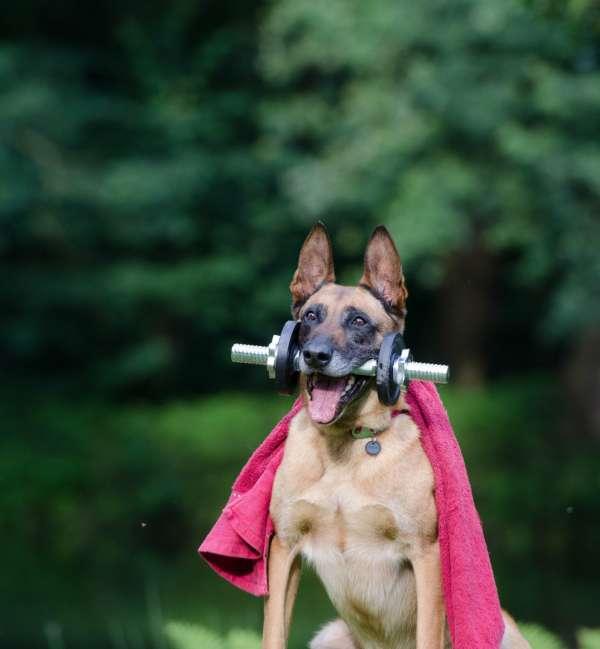 Dog Run Service